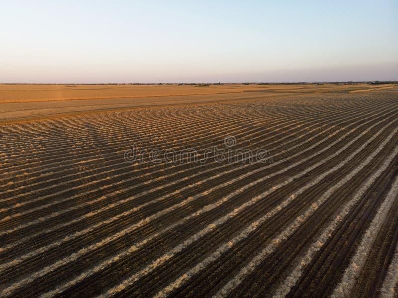 Ranking pól rolniczych w Sunset zdjęcia royalty free