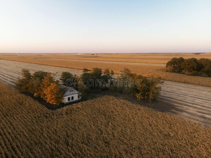 Ranking pól rolniczych w Sunset obrazy royalty free
