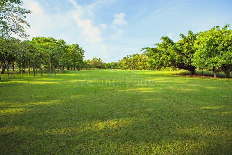 Ranku światła parkowej i zielonej trawy ogródu pole publicznie, drzewo obrazy stock