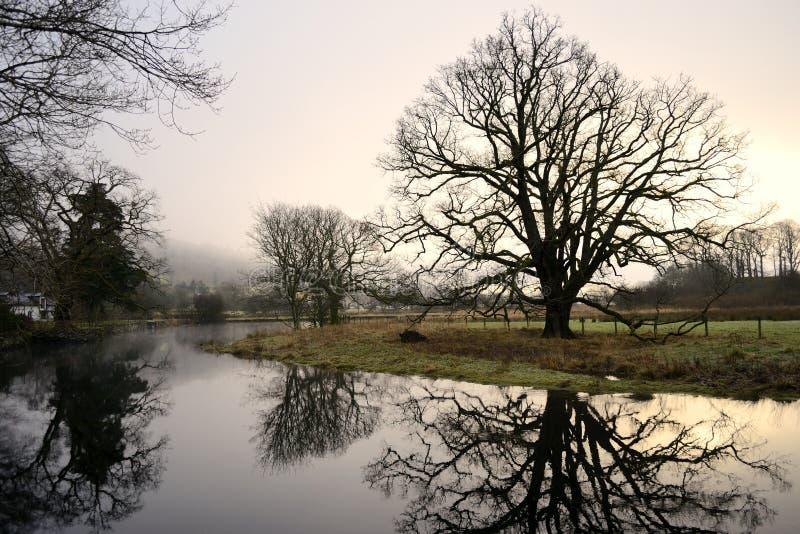 Ranku drzewo. zdjęcie royalty free