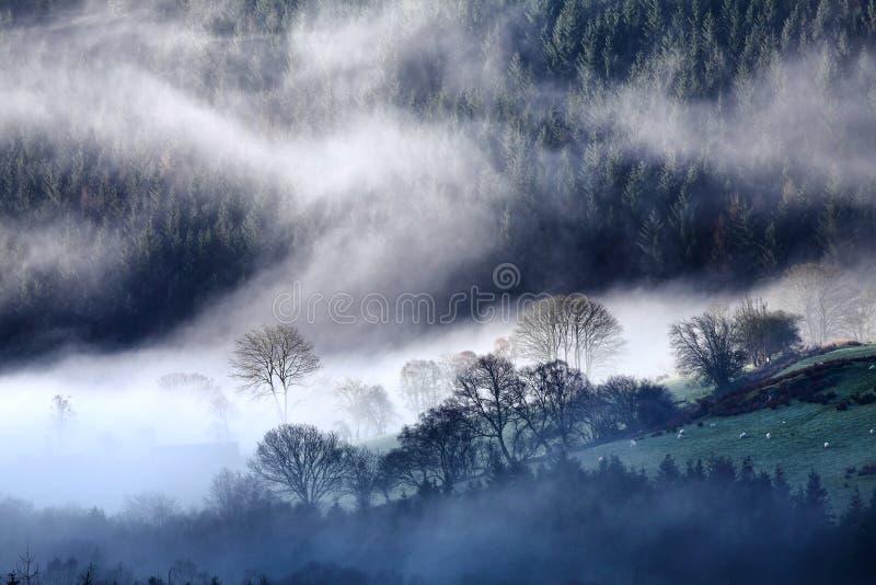 Ranku krajobraz zdjęcia royalty free