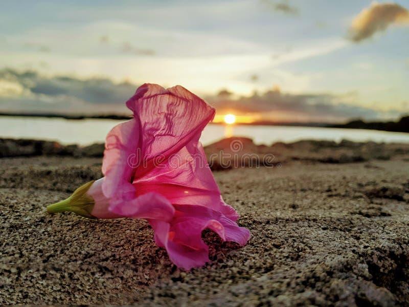 Ranku kwiat zdjęcie stock