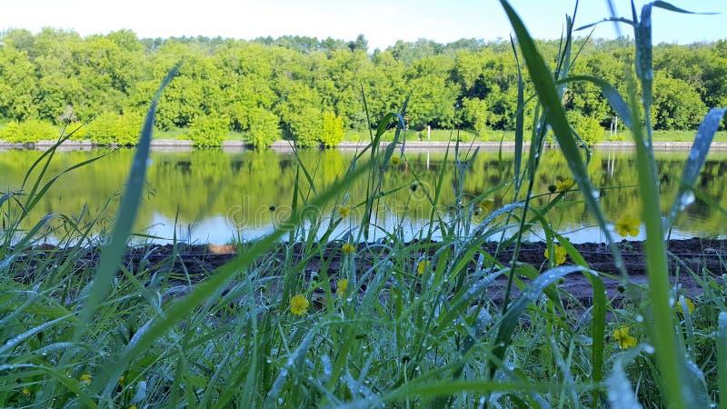 Ranku lata trawy rzeczna rosa obrazy royalty free