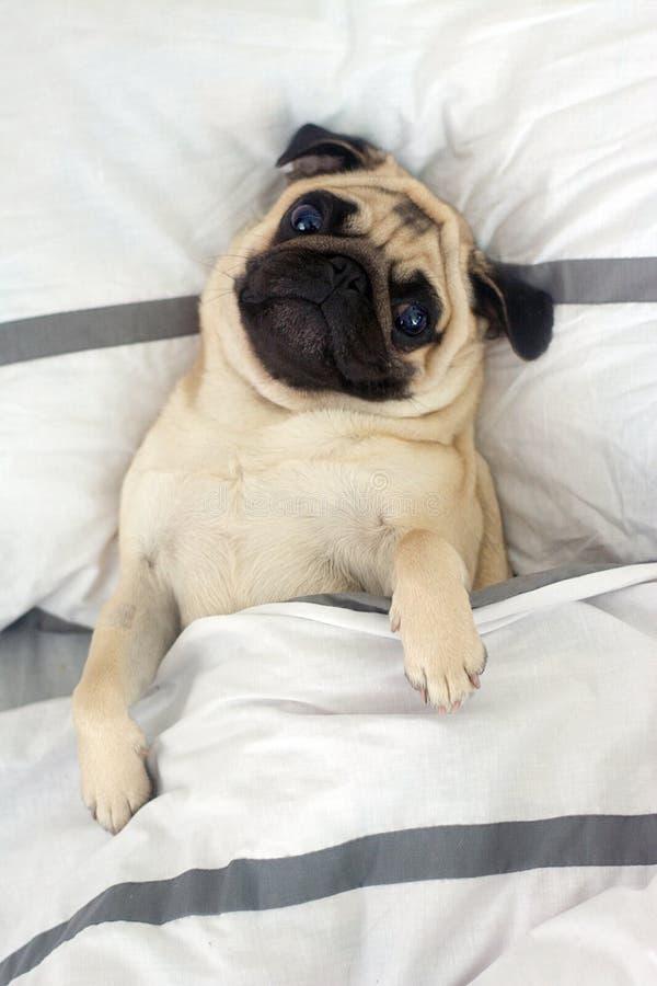 Ranku pies obrazy royalty free