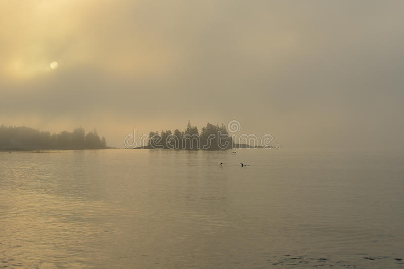 Ranku słońce pali przez mgłowej plaży fotografia royalty free