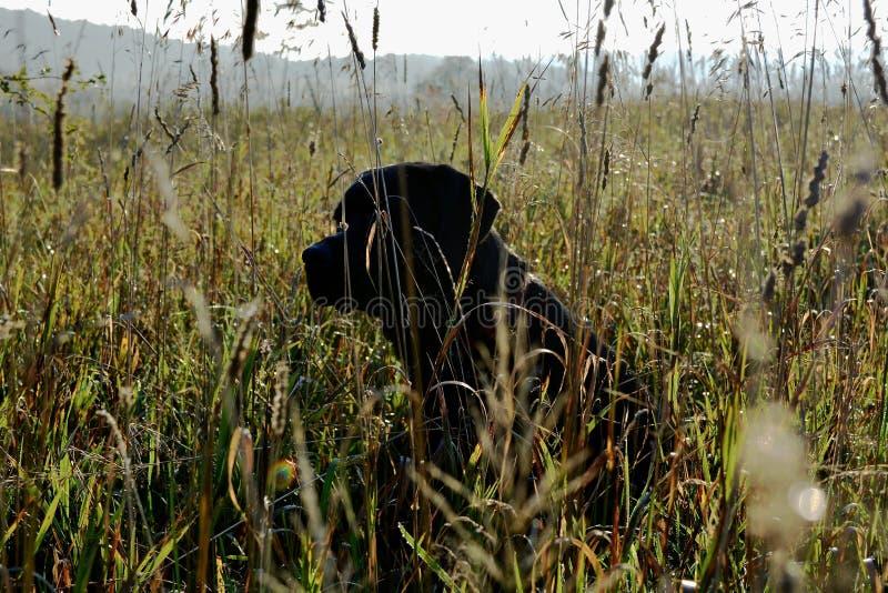 Ranku spacer na gospodarstwie rolnym zdjęcie stock