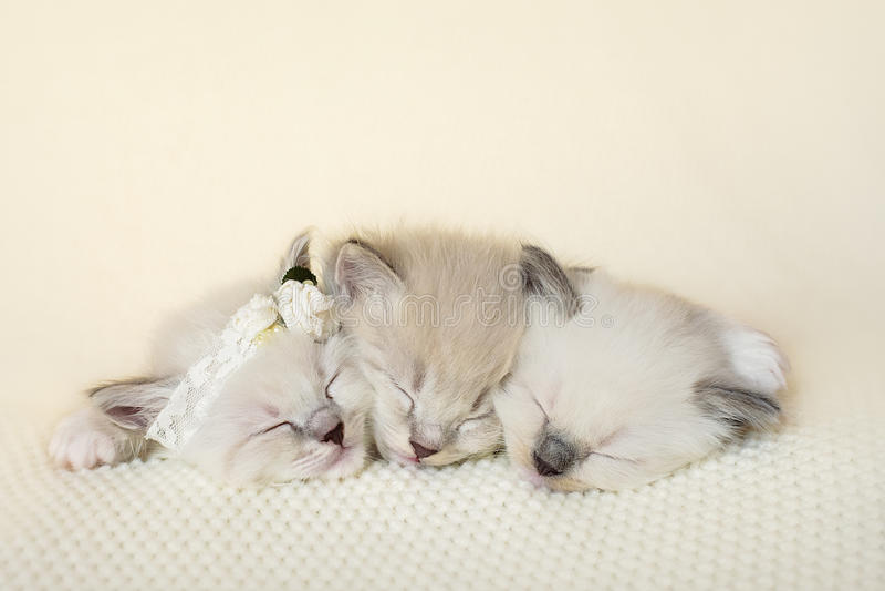 Rannicchiare adorabile di tre gattini immagine stock