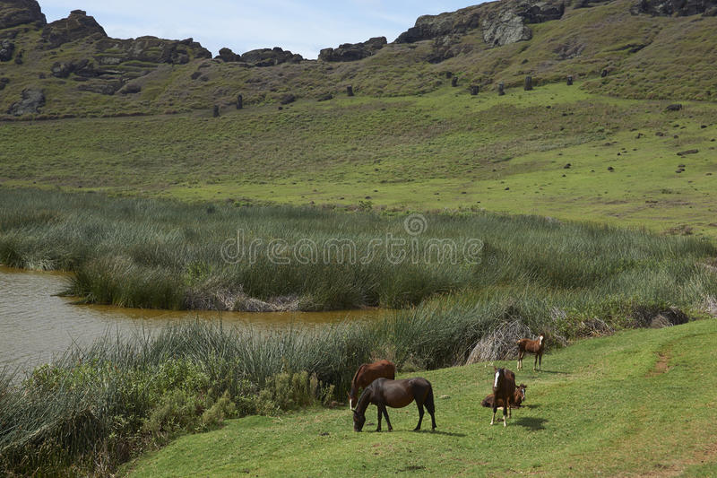 Rano Raraku, Easter Island, Chile. Rano Raraku. Horses grazing around the lake in the crater of the extinct volcano which was the quarry from which the Moai stock image