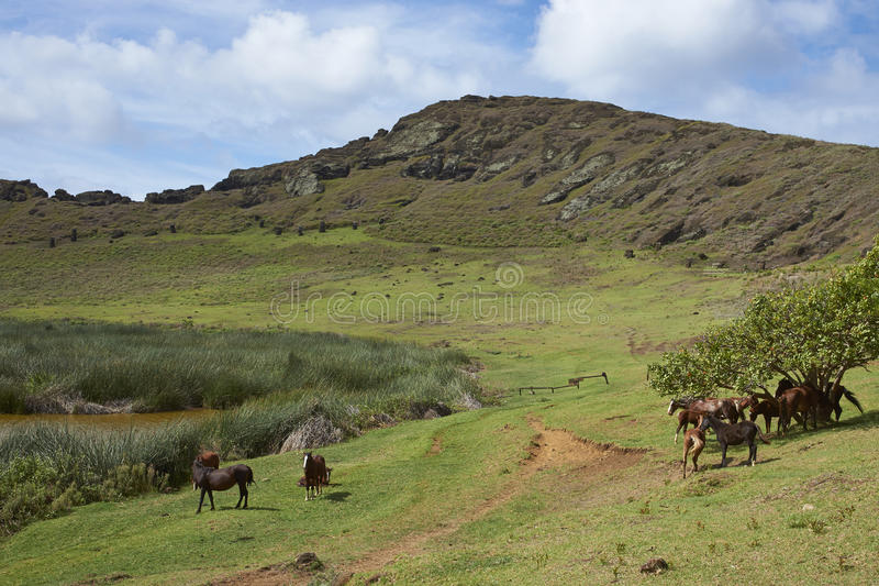 Rano Raraku, Easter Island, Chile. Rano Raraku. Horses grazing around the lake in the crater of the extinct volcano which was the quarry from which the Moai stock photography