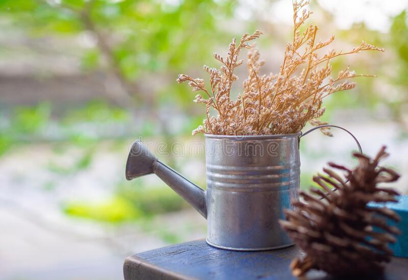 Rano słońce świeci puszkowanymi kwiatami, nawadnianymi, leżącymi latem na niebieskiej, zewnętrznej podłodze drewnianej fotografia stock