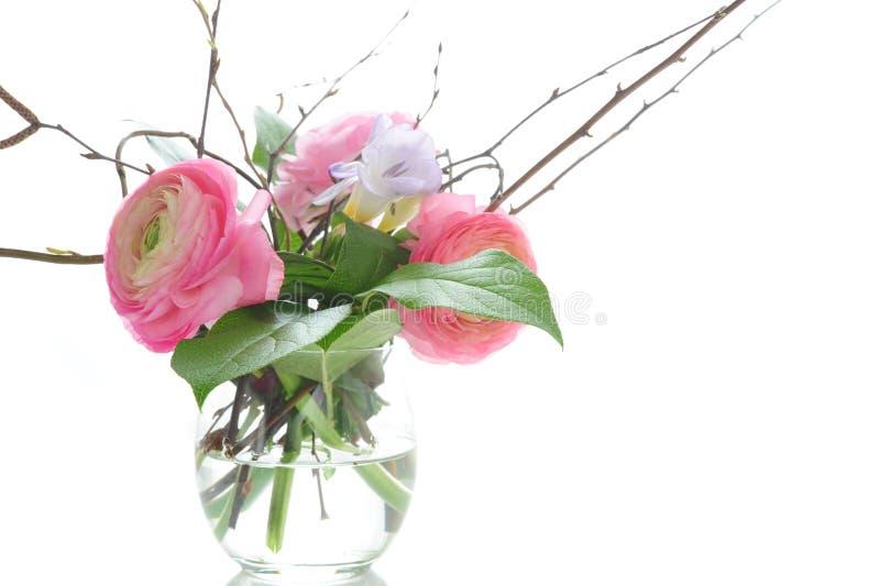 Ranunculus royalty-vrije stock foto