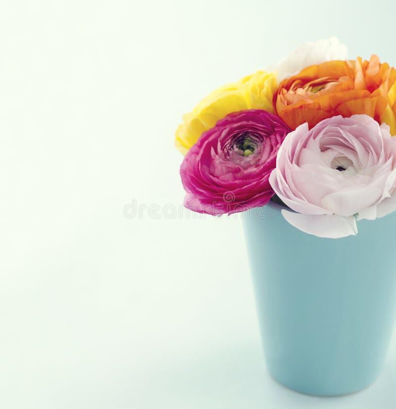 Ranunculus bloemen royalty-vrije stock fotografie