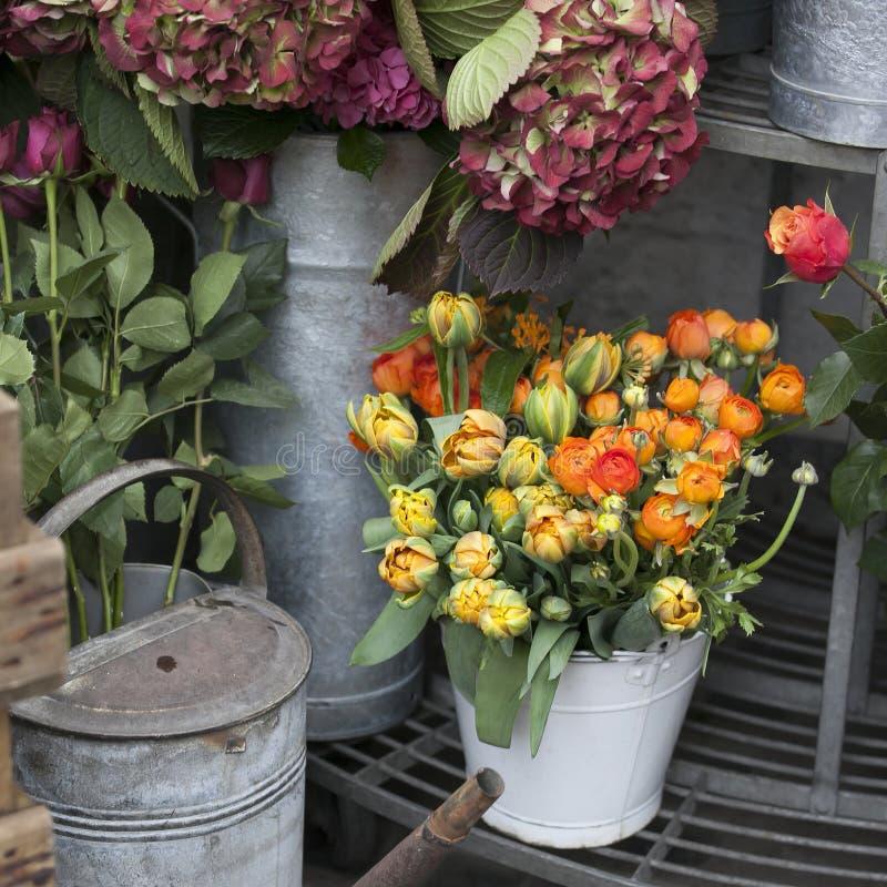 Ranunculus för bakgrund, härlig vårblomma, royaltyfri bild