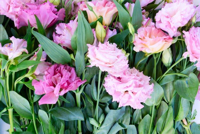 Ranunculus flat äggsammansättning royaltyfria foton
