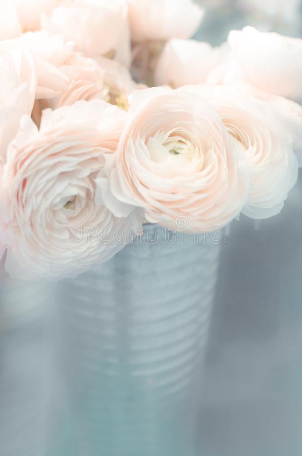 Ranunculus flower bouquet in a vase on pastel blue background, close up stock photography