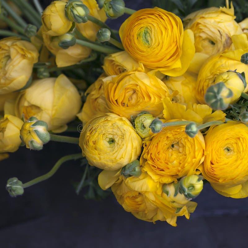 Ranunculus giallo fotografia stock libera da diritti