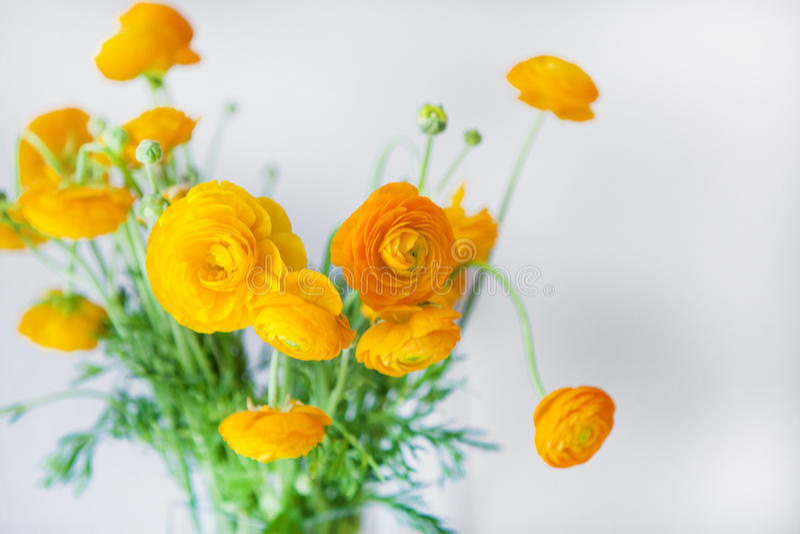 Ranunculus jaune photos libres de droits