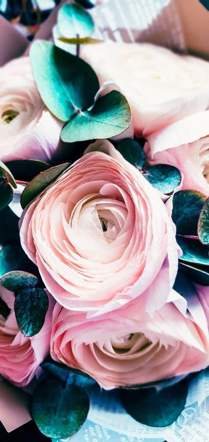 Ranunculus kwitnie blisko Piękny artystyczny bukieta projekt obraz royalty free