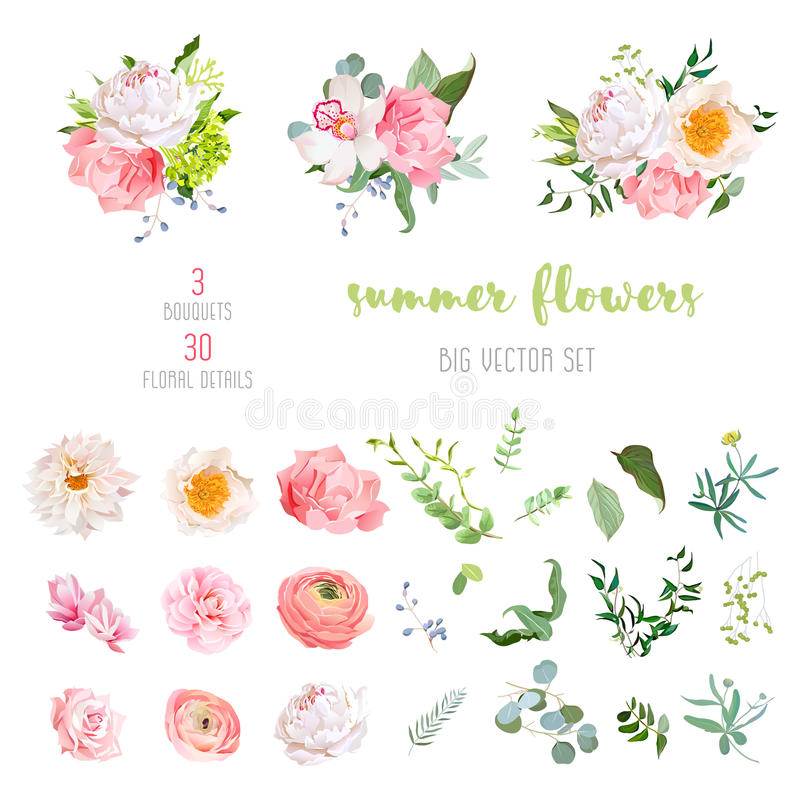 Ranunculus, rose, peony, dahlia, camellia, carnation, orchid, hydrangea flowers and decorative plants big vector collection stock illustration