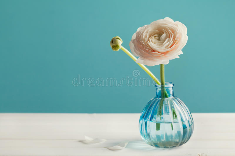 Ranunculus in vase against turquoise background, beautiful spring flower, vintage card stock photo