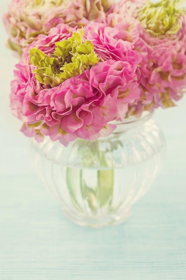 Ranunculusblommor royaltyfria bilder