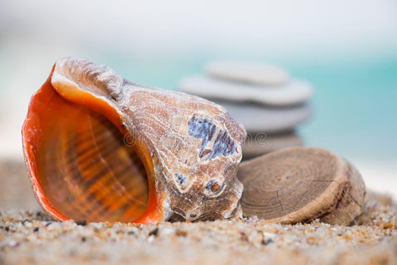 Rapana sulla spiaggia sabbiosa fotografia stock