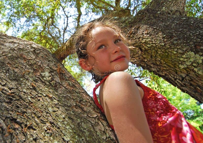 Rapariga acima na árvore fotos de stock royalty free