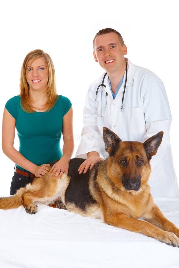 Rapariga e um veterinário que examina seu cão fotografia de stock