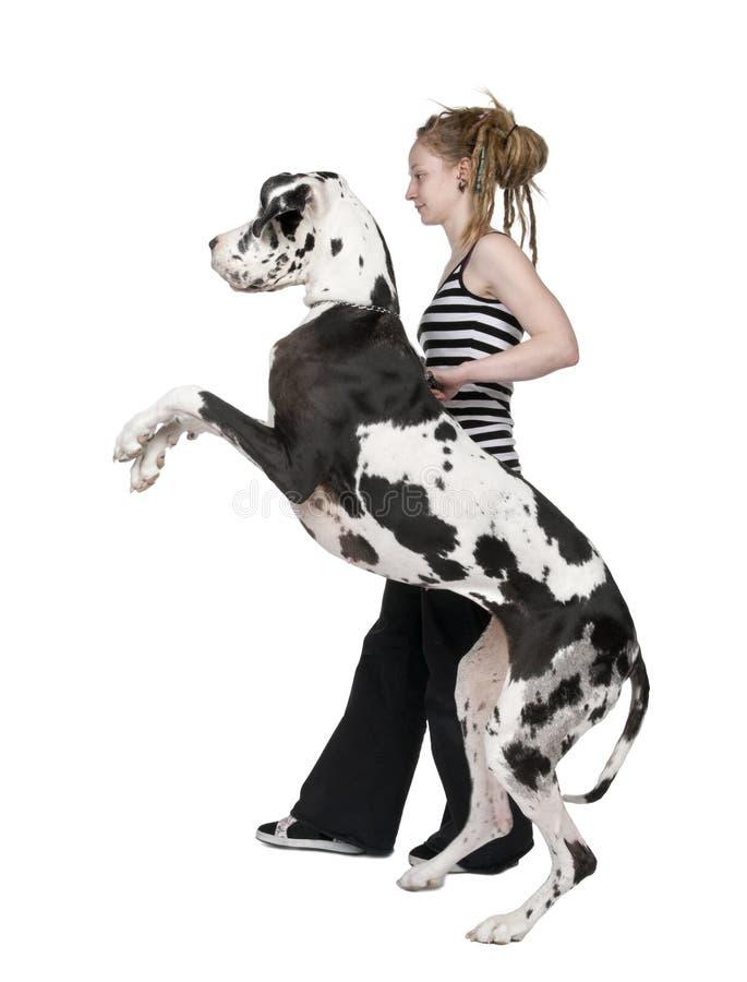 Rapariga que anda seu cão (grande dinamarquês 4 anos) ha foto de stock