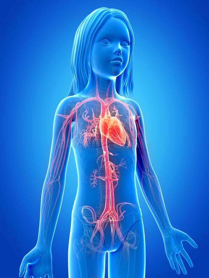 Rapariga - sistema vascular ilustração do vetor