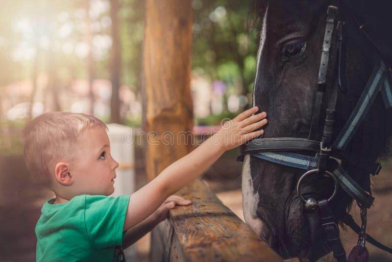 Rapaz pequeno bonito e um cavalo fotografia de stock