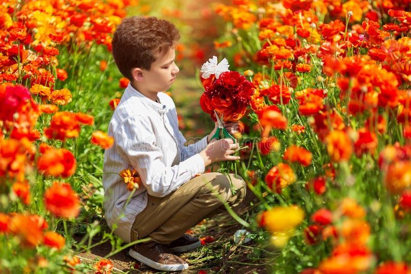 Rapaz pequeno bonito que trabalha em um jardim da mola, uma crian?a que toma de bot?es de ouro coloridos do cris?ntemo fotografia de stock royalty free