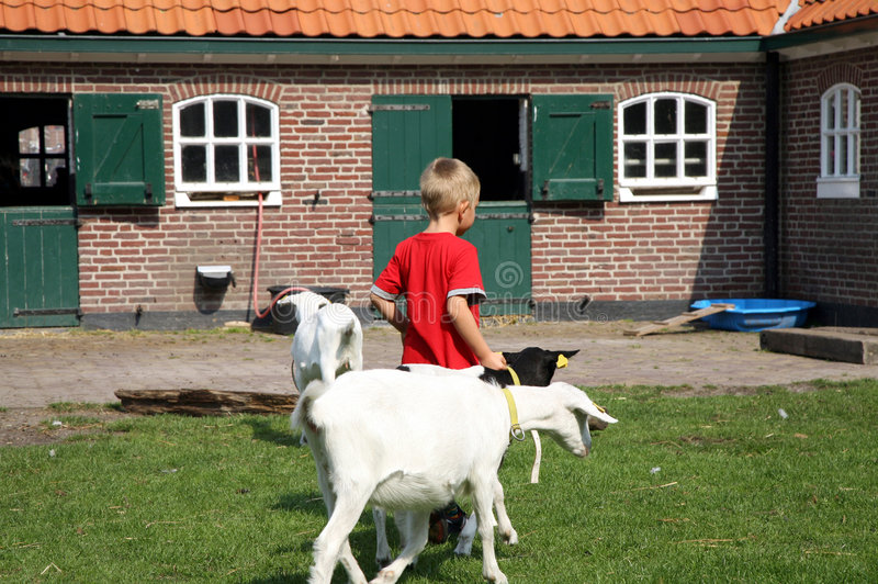 Rapaz pequeno com cabras imagem de stock