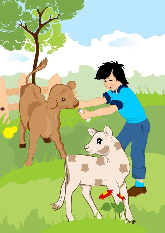 Rapaz pequeno com vitelas