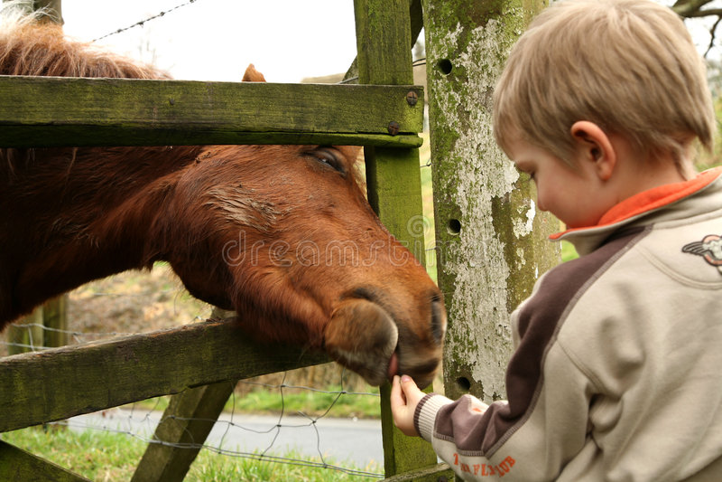 Rapaz pequeno e cavalo foto de stock