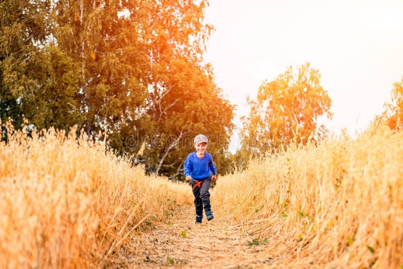 Rapaz pequeno em um campo de trigo foto de stock royalty free