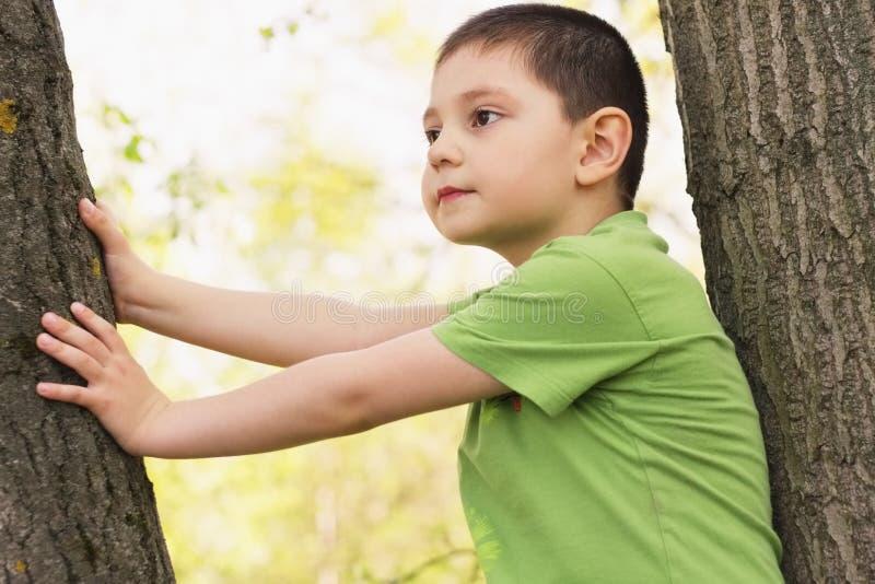 Rapaz pequeno entre árvores foto de stock royalty free