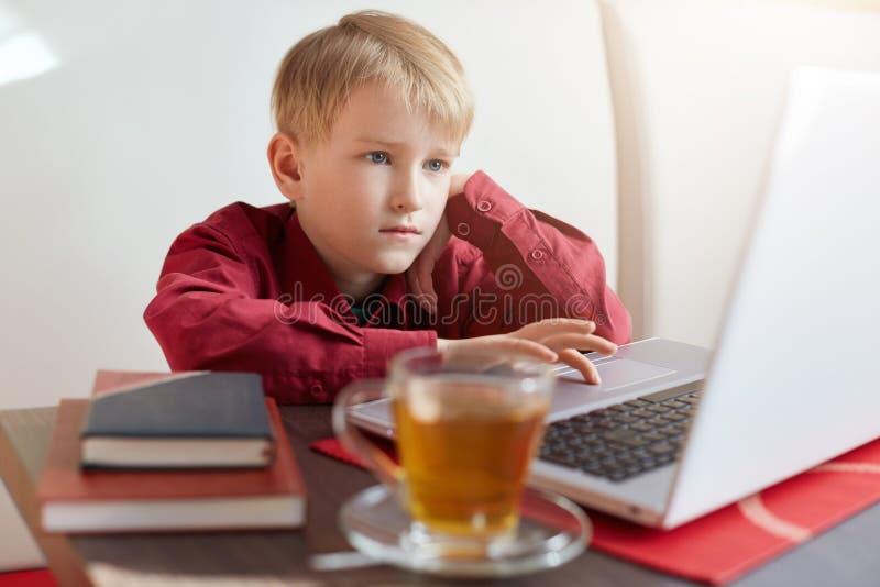 Rapaz pequeno louro sério na camisa vermelha que senta-se na frente do portátil aberto, olhando fixamente na tela com chá bebendo imagens de stock