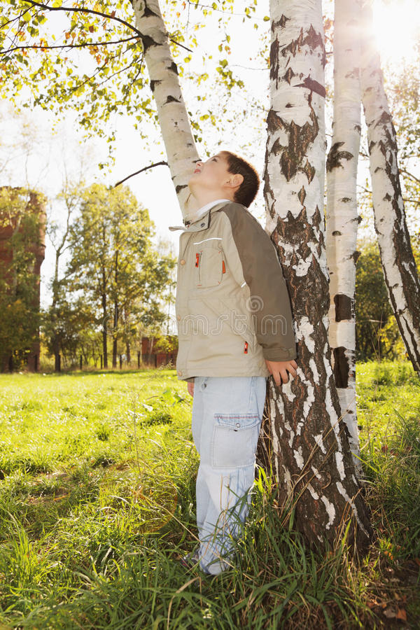 Rapaz pequeno na árvore de vidoeiro no parque imagens de stock