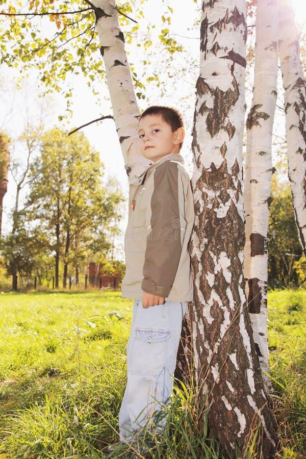 Rapaz pequeno na árvore no parque fotografia de stock royalty free