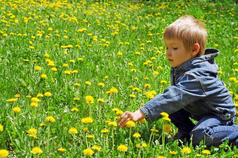 Rapaz pequeno no campo dos dentes-de-leão imagem de stock royalty free