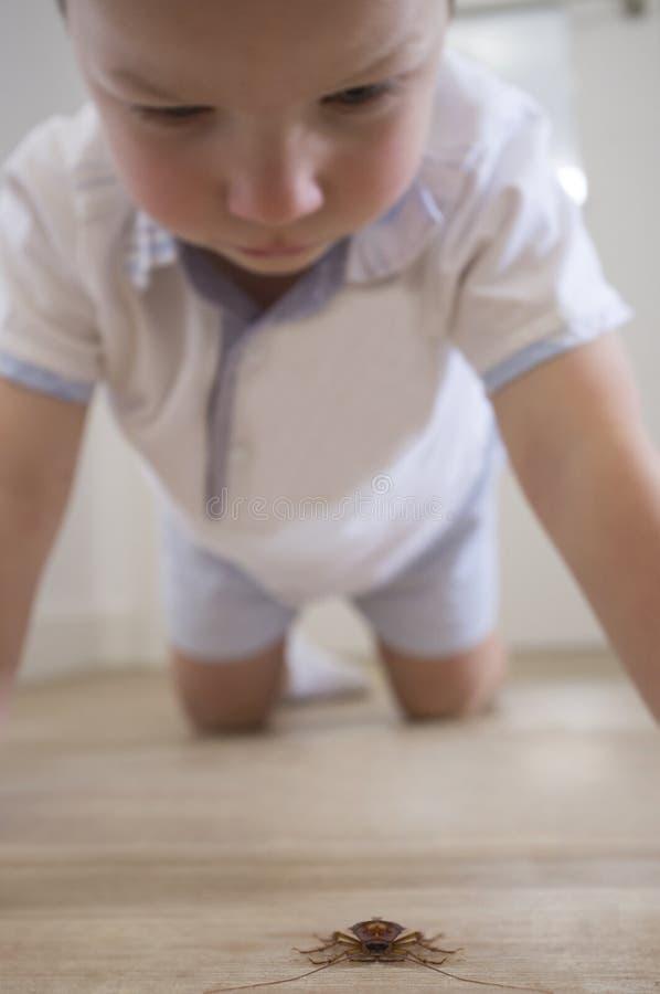 Rapaz pequeno observando uma barata grande sobre o assoalho da casa fotografia de stock