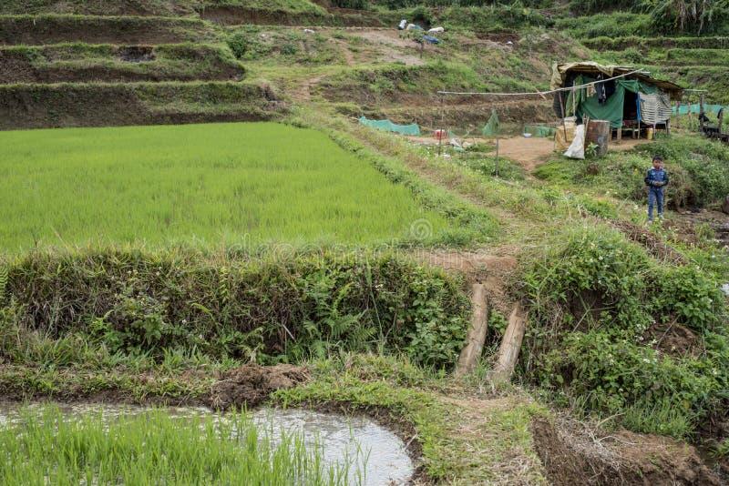Rapaz pequeno pelo campo do arroz em Pleiku fotografia de stock royalty free