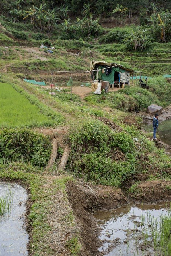 Rapaz pequeno pelo campo do arroz em Pleiku fotografia de stock