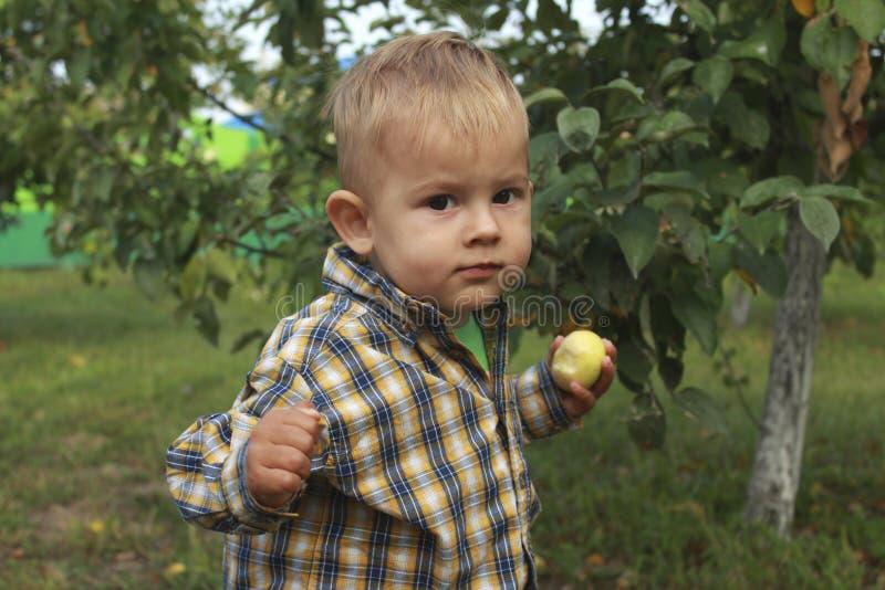 Rapaz pequeno que come a maçã vermelha no pomar imagem de stock