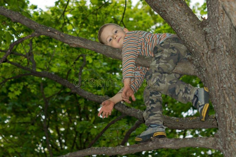 Rapaz pequeno que escala em uma árvore imagem de stock