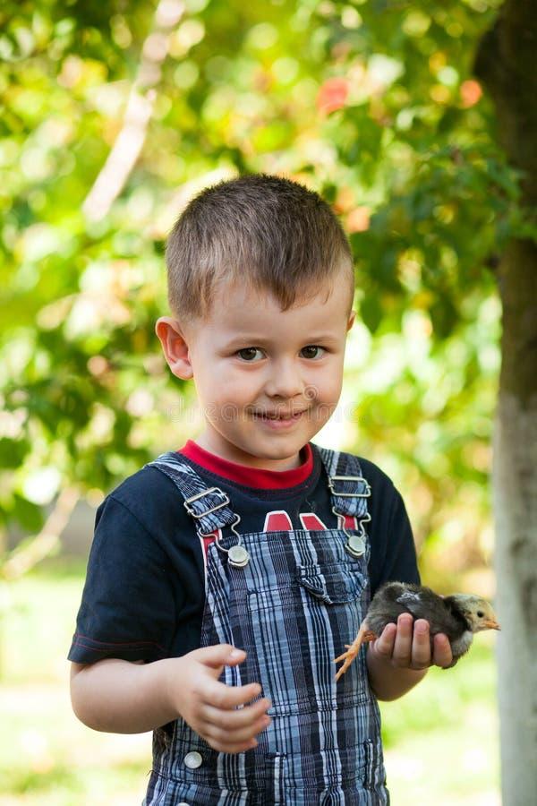 Rapaz pequeno que guarda um pintainho do bebê em uma exploração agrícola Conceito da vida feliz foto de stock royalty free