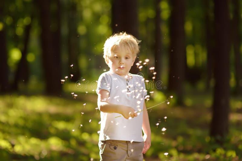 Rapaz pequeno que joga com fluff do dente-de-leão Fazendo um desejo imagem de stock royalty free
