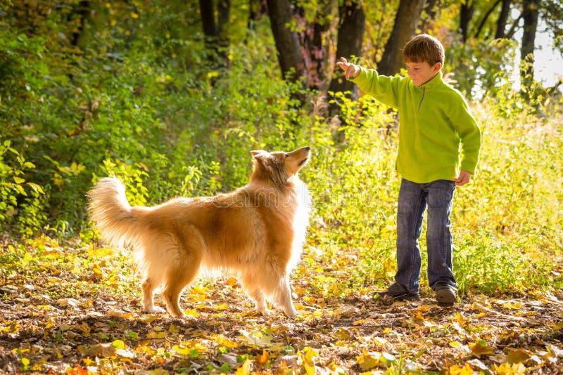 Rapaz pequeno que joga com o cão da collie na floresta do outono foto de stock royalty free