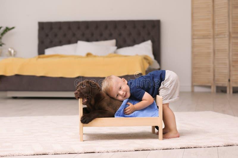 Rapaz pequeno que joga com o perdigueiro adorável do chocolate em casa foto de stock
